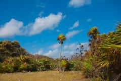 Beau paysage tropical avec des cactus et des palmiers Tulum, Maya du Mexique, Yucatan, la Riviera Images stock
