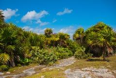 Beau paysage tropical avec des cactus et des palmiers Tulum, Maya du Mexique, Yucatan, la Riviera Photos libres de droits