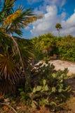 Beau paysage tropical avec des cactus et des palmiers Tulum, Maya du Mexique, Yucatan, la Riviera Photo libre de droits