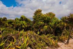 Beau paysage tropical avec des cactus et des palmiers Tulum, Maya du Mexique, Yucatan, la Riviera Photographie stock