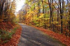 Beau paysage vif d'automne de couleur dans une forêt avec une route photographie stock libre de droits