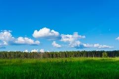Beau paysage Zone, for?t et ciel Panorama Herbe juteuse verte For?t conif?re sur l'horizon Cumulus dans le ciel photographie stock libre de droits