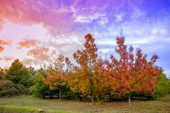 Beau pendant l'automne photos stock