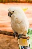 Beau perroquet Photographie stock libre de droits