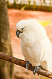 Beau perroquet Photo libre de droits
