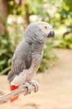 Beau perroquet Photographie stock