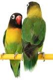 Beau perroquet vert Image libre de droits