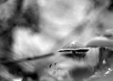 Beau petit élevage de champignon Image stock