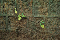 Beau petit élevage de plante verte Photos libres de droits