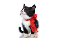Beau petit chaton images stock