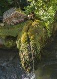 Beau petit jardin Photo libre de droits