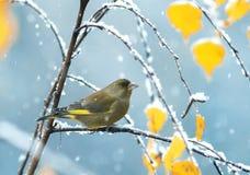 Beau petit oiseau se reposant en parc sur un arbre avec l'automne Image stock