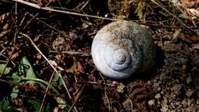 beau petit pain blanc du ` s d'escargot dans la forêt images stock