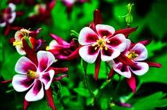 Beau peu de fleurs sur le fond du feuillage vert photos libres de droits