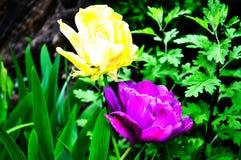 Beau peu de fleurs sur le fond du feuillage vert images libres de droits