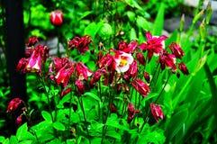 Beau peu de fleurs sur le fond du feuillage vert photographie stock