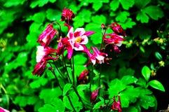 Beau peu de fleurs sur le fond du feuillage vert images stock
