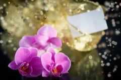 Beau Phalaenopsis de branche Photographie stock