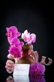 Beau Phalaenopsis de branche avec gratitude Photographie stock