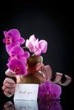 Beau Phalaenopsis de branche avec gratitude Photo stock