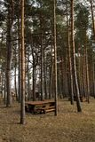 Beau pique-nique éloigné et tache campante près d'une mer baltique dans une forêt de pin avec une plage de rocher à l'arriè image libre de droits