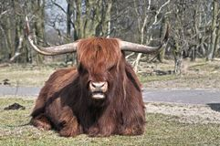 Beau plan rapproché d'un montagnard écossais d'écossais de montagnard images libres de droits