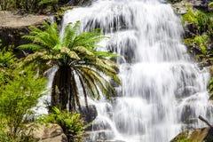 Beau plan rapproché plus faible d'automnes dans l'Australien indigène Forest Kiewa Valley, Victoria, Australie Image libre de droits