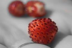 Beau plan rapproché rouge de fraise de fraise Image libre de droits