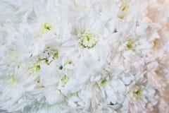 Beau plan rapproch? de f?te de bouquet Bouquet lumineux des fleurs blanches comme cadeau photos stock