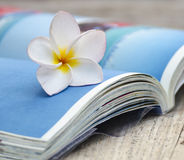 Beau Plumeria et livres Photographie stock libre de droits