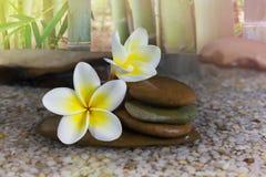 Beau plumeria rose doux et caillou de fleur avec l'arbre en bambou Photographie stock libre de droits