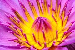 Beau pollen de fleur rose Photographie stock