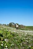 Beau poney irlandais dans un domaine de marguerite Images libres de droits