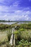 Beau pont en bois croisant le canal et la rizière Photos libres de droits