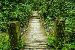 Beau pont en bois dans la forêt tropicale de colline avec l'usine d'humidité, située dans Mindo image libre de droits