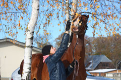 Beau portrait de fille d'adolescent et de cheval de baie en automne Photo stock