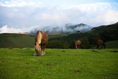 Beau pottok gratuit de chevaux mangeant en montagnes d'irati, pays Basque, France Photos libres de droits