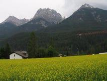 Beau pré alpin Images stock