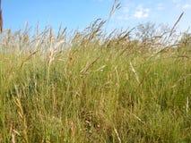 Beau pré avec une herbe verte Image stock