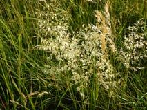 Beau pré avec une herbe verte Photo libre de droits