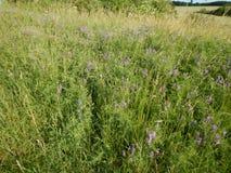 Beau pré avec une herbe verte Photographie stock