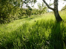 Beau pré avec une herbe verte Images libres de droits