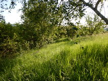 Beau pré avec une herbe verte Photo stock