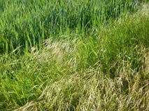 Beau pré avec une herbe verte Images stock