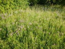 Beau pré avec une herbe verte Image libre de droits