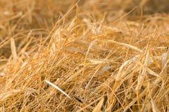 Beau pré de forêt de tache floue avec le fond clair d'herbes sauvages Photographie stock libre de droits