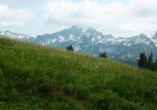 Beau pré de montagne avec des fleurs en fleur, le mont Rainier Photo libre de droits