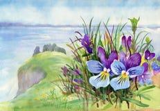 Beau pré d'iris dans l'aquarelle Images stock
