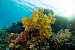 Beau récif coralien avec le sealife Image stock