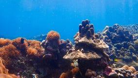 Beau récif coralien dans l'eau du fond Photographie stock libre de droits